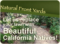 Natural Front Yards - Lawn Replacement - California Natives - Water conservation - Sustainable landscaping